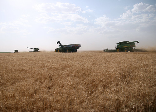 The combines follow using their autosteer. Meanwhile the middle combine prepares to dump on the graincart.