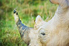"PhotoFly Travel Club Kenya Safari 2011! • <a style=""font-size:0.8em;"" href=""http://www.flickr.com/photos/56154910@N05/5892416423/"" target=""_blank"">View on Flickr</a>"