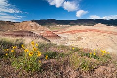 Painted Hills (greg.gibb) Tags: park usa oregon nikon or hills wildflowers geology paintedhills nationalmonument johndayfossilbeds shale siltstone mudstone lignite d80