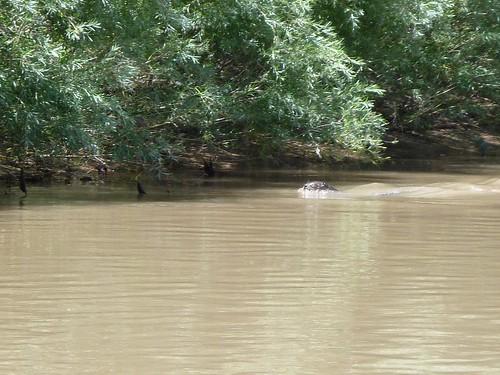 More otter!