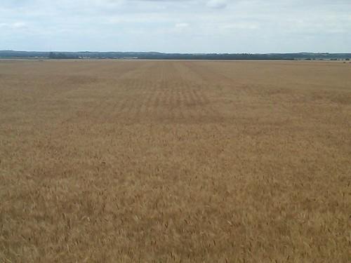pre wheat harvest 11