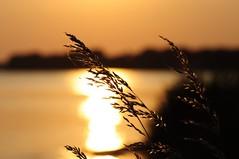 Summer evening (misanthrop10) Tags: light summer sun color water evening abend licht warm wasser no sommer gras sonne ostsee edit grser
