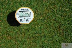 soil temperature bentgrass summer
