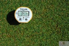 soil temperature bentgrass summer