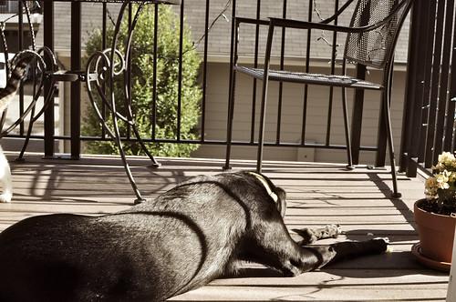 saturday morning sunbathing