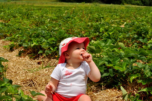 Strawberry picking 2011