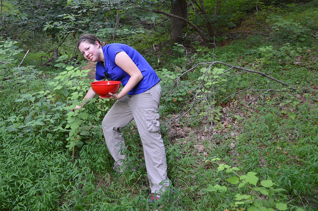 picking wine berries