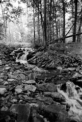 Terra Cotta Conserv. Area (dawsean) Tags: ei64 fujifilmneopan100acros canoneos33v rodinal110015minsemistand