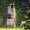 365/188 - Secret Garden (RachelMarieSmith) Tags: portrait selfportrait abandoned garden photography gardening films movies secretgarden koreanfilms