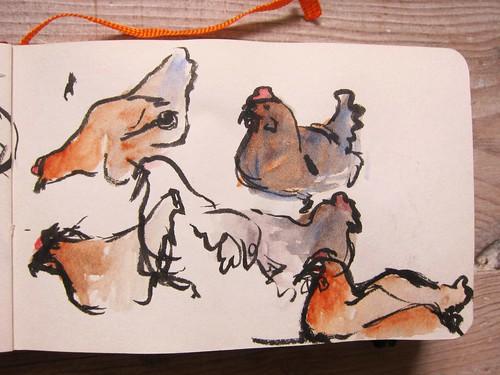 Chicken Sketches by Danalynn C