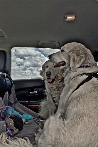 Daily Driving Dogs 13 July 2011 (HDR)