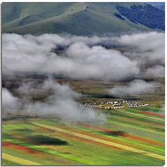 Fog and colours (Nespyxel) Tags: lines misty fog clouds square landscape nuvole colours pov perspective pointofview nebbia colori paesaggio castelluccio linee coltivazione colorphotoaward nespyxel stefanoscarselli fleursetpaysages