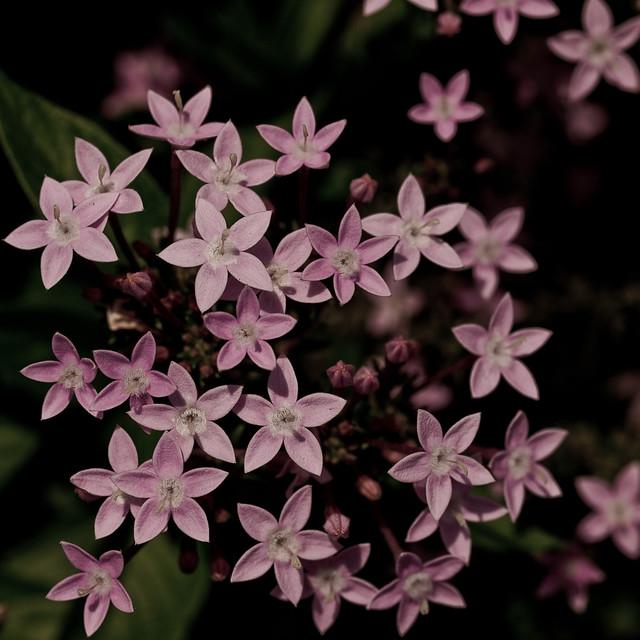 Tiny Lavender
