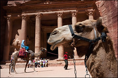 Camels - Petra, Jordan (Maciej Dakowicz) Tags: tourism animal country petra treasury middleeast landmark tourist unesco arabic jordan camel arab arabia historical attraction kingdomofjordan