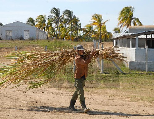"""""""Los campesinos colombianos están llevando del  bulto con la dura lucha por modernizar la economía"""": Minagricultura"""