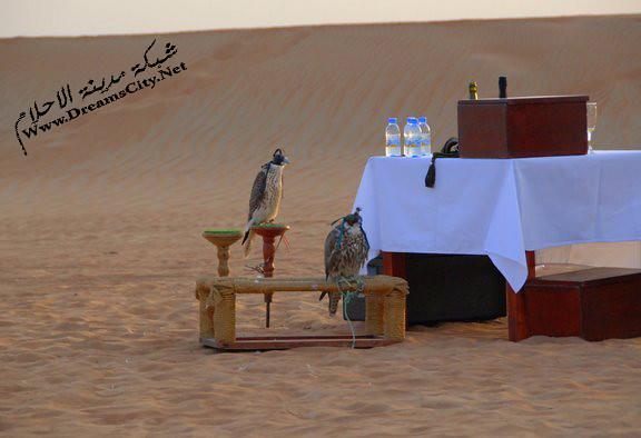 الصحراوي 2011 المنتجع السياحي الصحرواي 2012 المنتجع الصحراوي