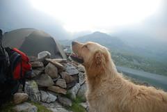 Retezat National Park, Romania (Anca Iordache) Tags: morning dog mountain lake rock nikon rocks tent romania doggy retezat budy