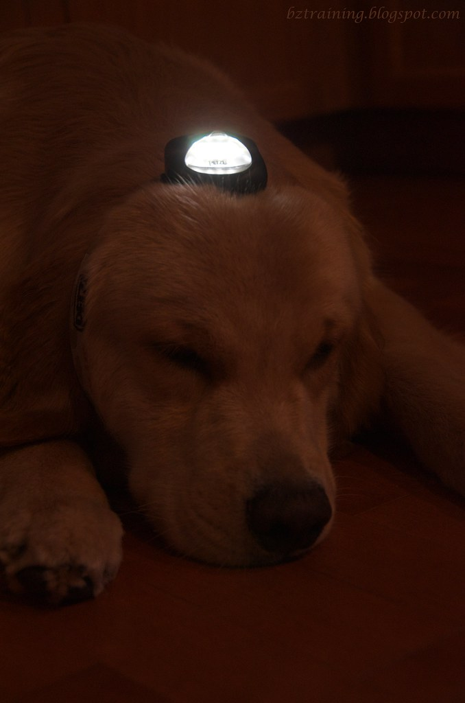 Henry with a Headlamp