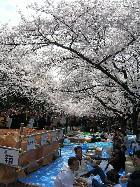 d7-13-ueno-park