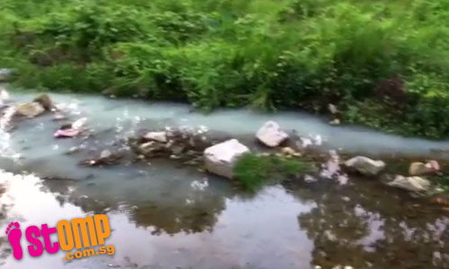 Water pollution? White substance discharged into Upper Thomson stream