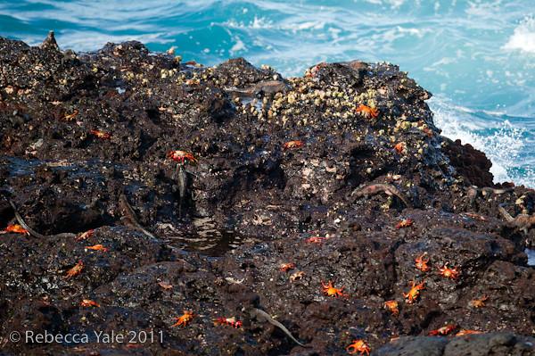 RYALE_Galapagos-219