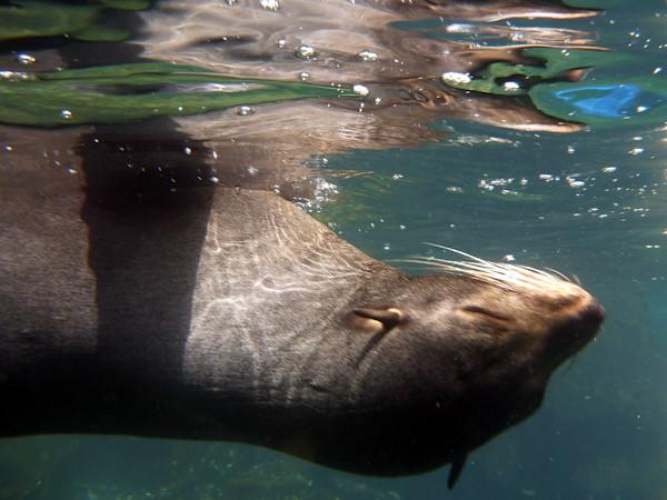 RYALE_Galapagos_Underwater-11
