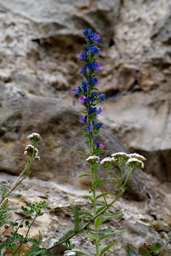 Einsame Pflanze auf der Ruine