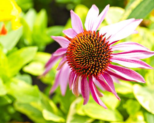 English Gardens Flower