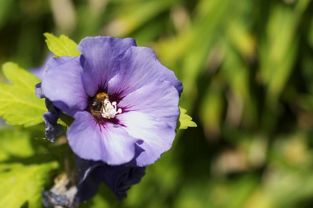 into pollen