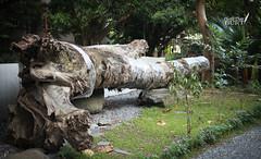 松山英樹 画像2