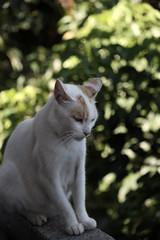 (命は美しい) Tags: cat canon taiwan taipei dslr 貓 eos30d 侯硐 55250mm