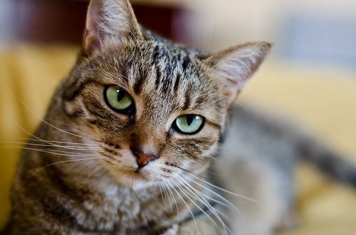 [フリー画像] 動物, 哺乳類, 猫・ネコ, 201108051700