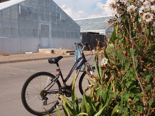 Bike Outside of Garden