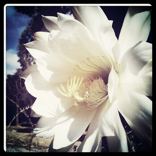 Playing around with Instagram at the Stanford Cactus Garden