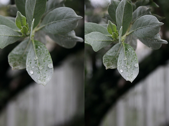 rainy walk manual diptych