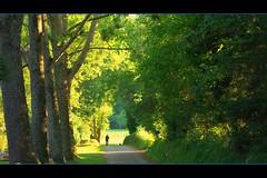 Promenade... (Grard Farenc (slowly back) !) Tags: path walk arbres footpath sentier chemin bois