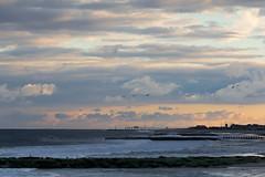Bradley Beach, its groins, and migratory birds at sunset, New Jersey (Sebastian Anthony) Tags: ocean travel sea usa water birds yellow 50mm pier newjersey surf groyne groin oceangrove