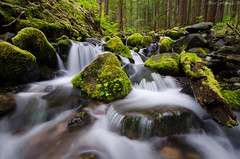 Sol Duc River Trail, Oylmpic National Park [Explored] (Steve Flowers) Tags: washington hiking oylmpicnationalpark solducrivertrail nikond7000 nikon1024mmlens