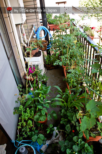 my-little-garden-in-japan-jun-2011