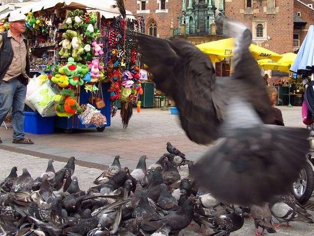 Krakow Square, pigeons