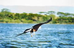 "PhotoFly Travel Club Kenya Safari 2011! • <a style=""font-size:0.8em;"" href=""http://www.flickr.com/photos/56154910@N05/5892433313/"" target=""_blank"">View on Flickr</a>"
