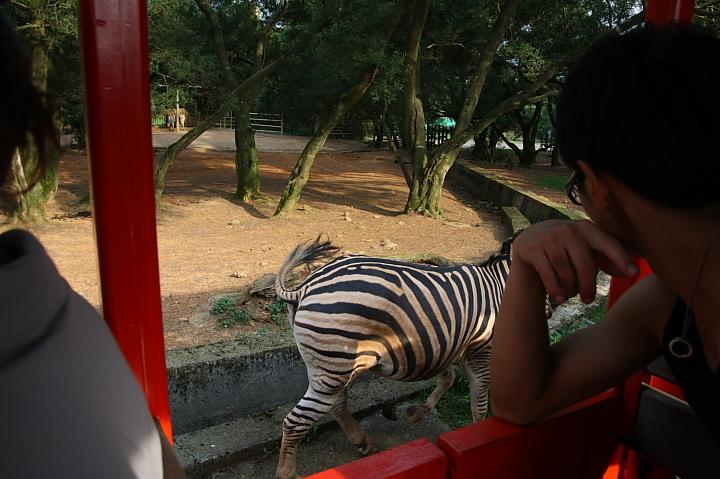 六福村動物園059