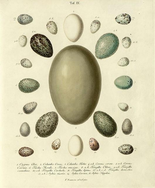 Die Eier der Vögel Deutschlands i, 1818