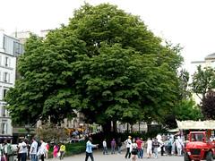 Parijs: Kastanje Place de Saint Pierre (Astrid Sibbes) Tags: city plant paris france colour tree nature bomen europa europe groen colours capital boom frankrijk arbre parijs capitalofeurope capitaloftheworld europesehoofdstad