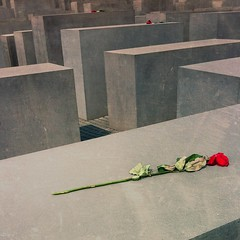 Memorial to the Murdered Jews of Europe (Silkelarium) Tags: berlin rose 4 denkmal iphone memorialtothemurderedjewsofeurope trauer nachdenken denkmalfrdieermordetenjudeneuropas silkelarium bauwerkimzentrumberlins