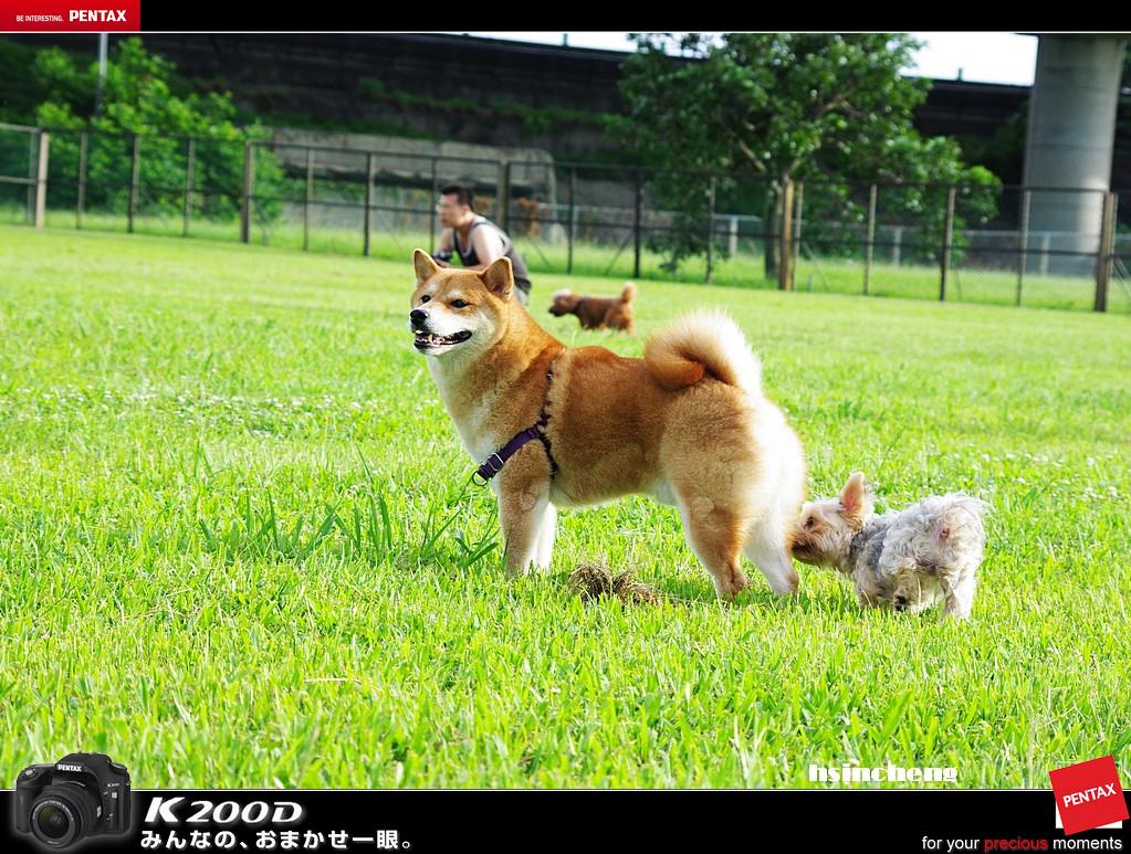 大佳河濱(狗狗)迎風運動公園
