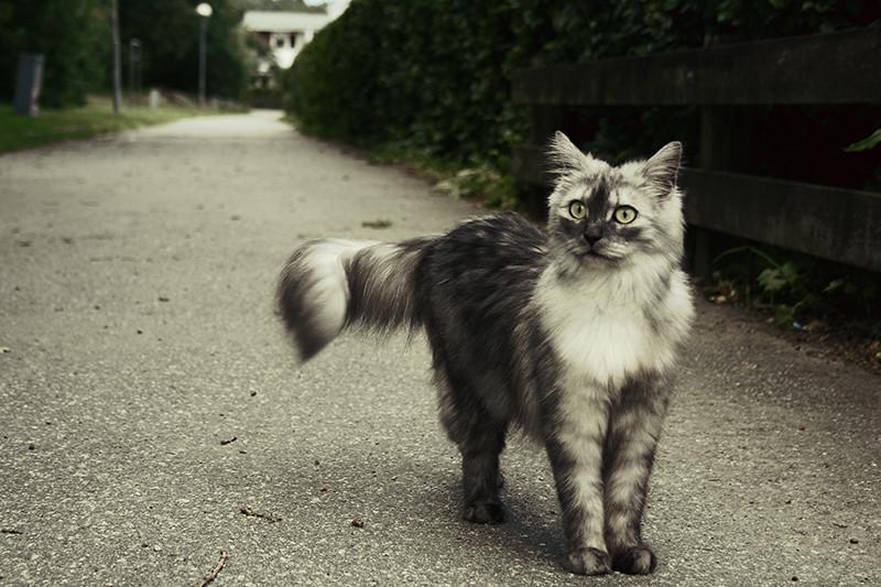 träffade en katt, så fin
