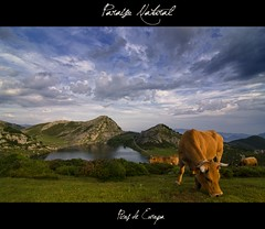 Asturias (jorgetorre2) Tags: summer sky espaa mountain lake verde green nature clouds landscape cow spain paradise asturias paisaje lagos nubes verano enol prado montaa paraiso vaca picosdeeuropa covadonga cangasdeonis lagoenol pastando