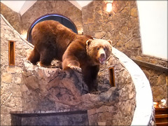 "Bear Taxidermy • <a style=""font-size:0.8em;"" href=""http://www.flickr.com/photos/27376150@N03/5930140411/"" target=""_blank"">View on Flickr</a>"