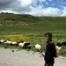 Pastora de ovelhas
